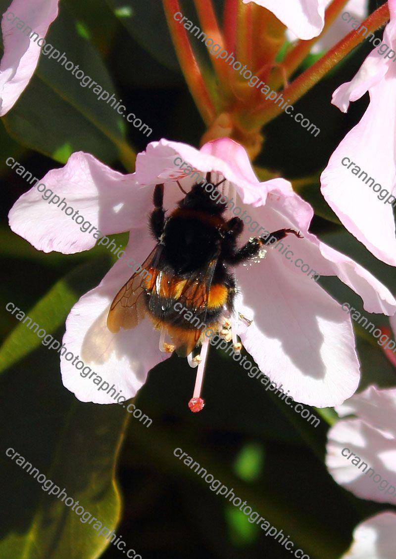 pollenharvest