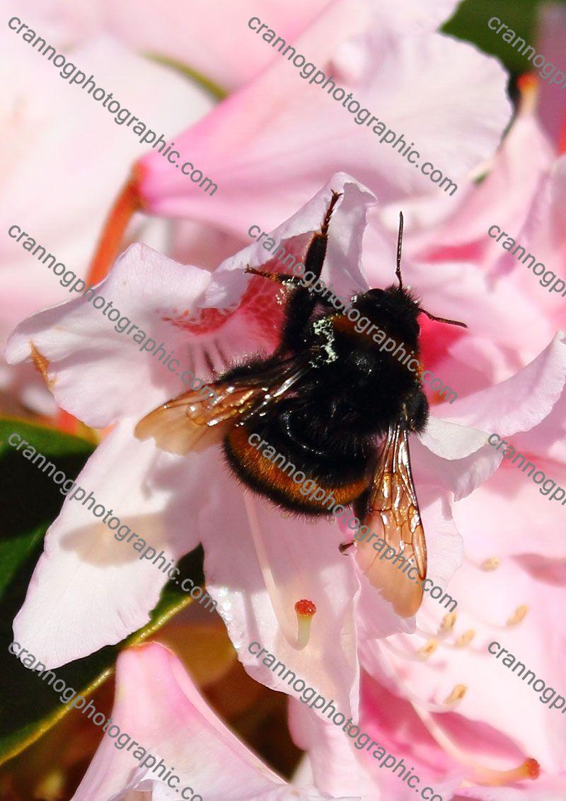 pollenharvest2